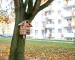 bautagebuch_friedensweg_20_11_02_0039
